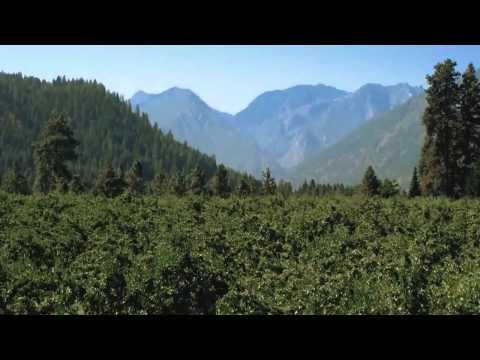 Farm to Fresh: Stemilt Farms Russian River Pears