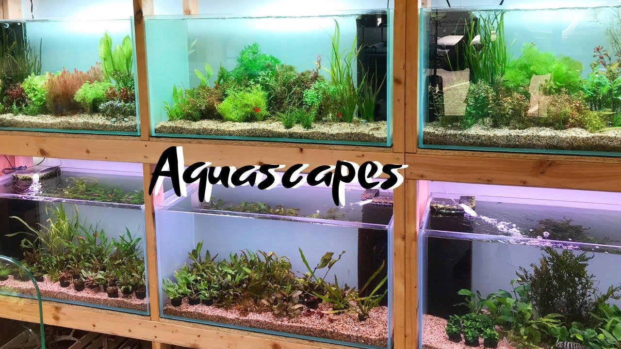 Visiting An Amazing Aquascaping Store In Hawaii Youtube