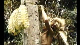 Video Adat Dan Kehidupan Suku Dayak Di Kalimantan download MP3, 3GP, MP4, WEBM, AVI, FLV Oktober 2018