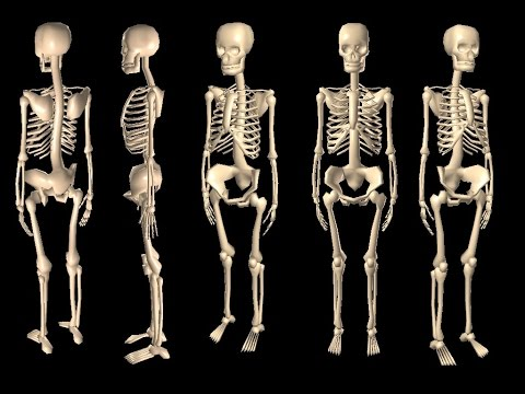 Top 10 Longest Bones In The Human Body