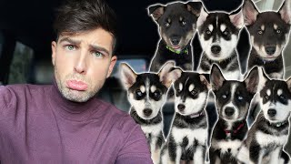 The Puppies Have a New Home! | Mister Preda
