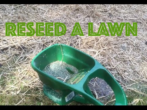 how to repair lawn grass how to reseed a lawn, Natural flower