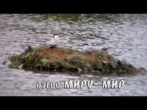 Остров -гнездо .24