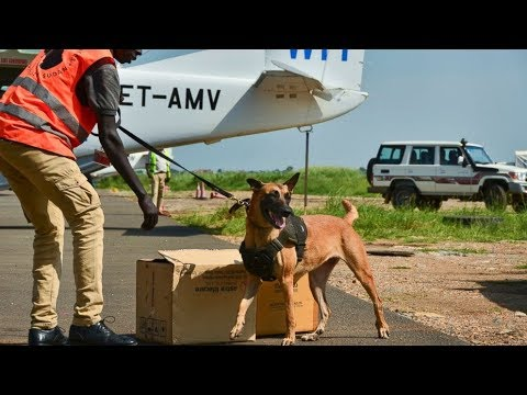 In South Sudan, just 2 dogs patrol for wildlife trafficking