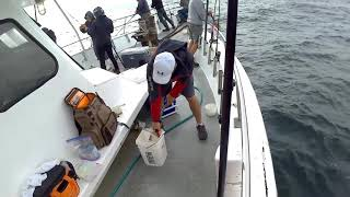 frances fleet 08/08/2017 fluke and black sea bass