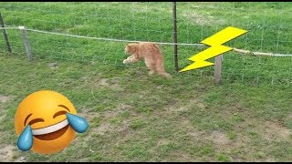 GOATS and CAT gets SHOCKED by ELECTRIC fence - Episode BONUS