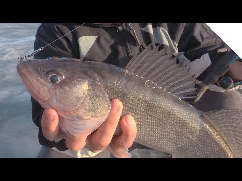 How To Use Water Depth To Catch Walleye While Ice Fishing