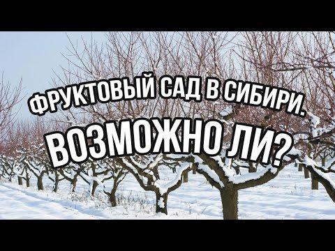 Фруктовый сад в Сибири. Возможно ли?