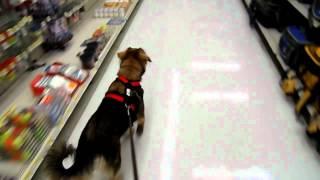 Dog-scootering Through Walmart