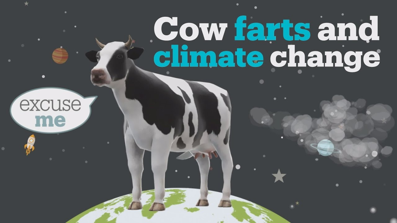 Cow farts and climate change - YouTube
