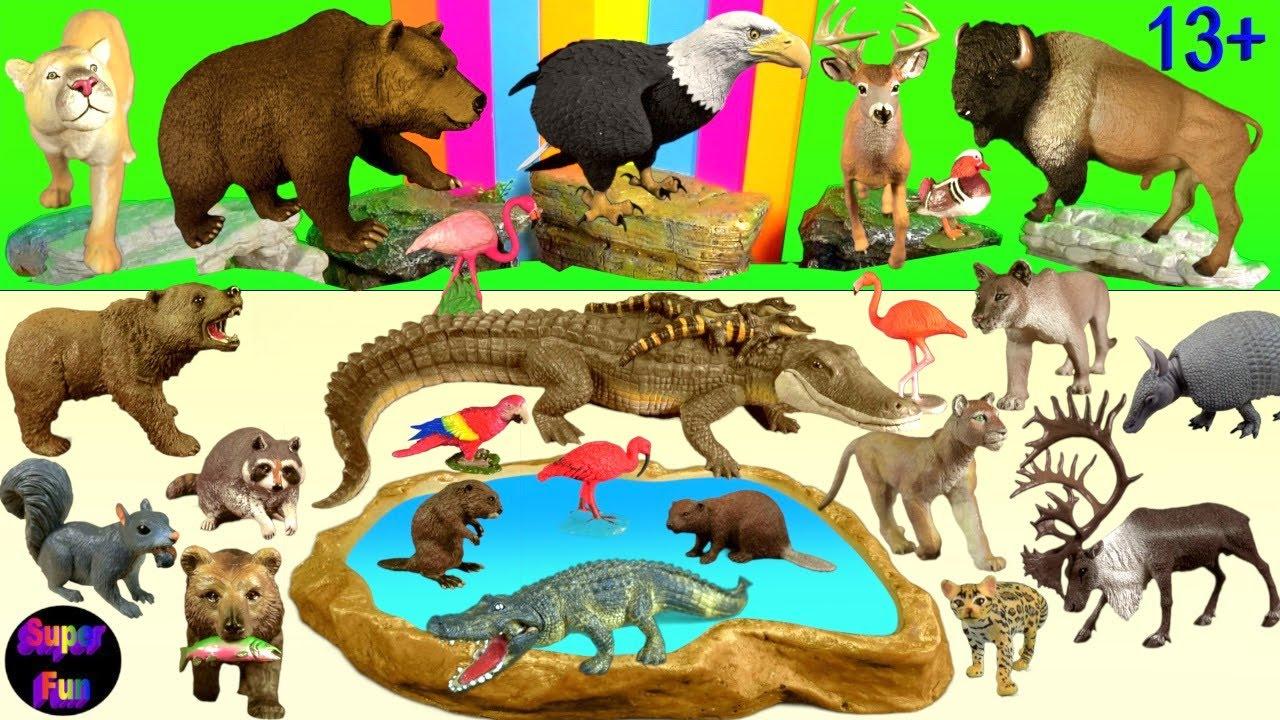 Big Cat week - Zoo Animals Cougar Alligator Bear Bison Eagle Deer 13+