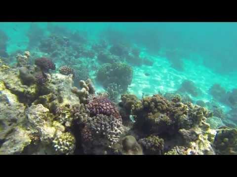 Snorkeling off Mnemba island - Zanzibar