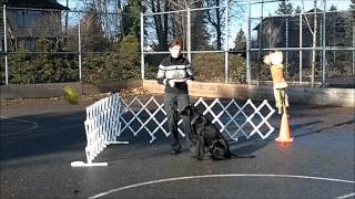 Front Games For Competition Obedience