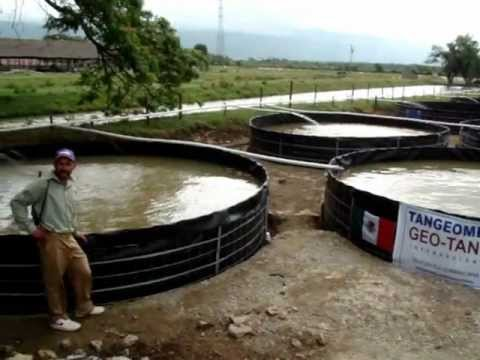 Tanques de geomembrana tangeomex republica dominicana for Tanques para peces geomembrana