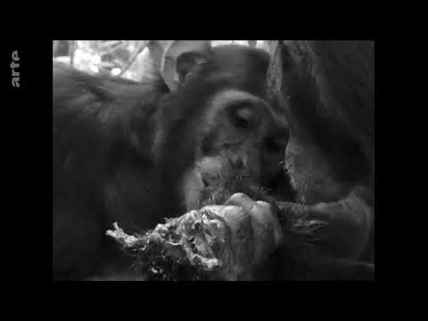 Vidéo Voice over documentaire Paroles d'animaux