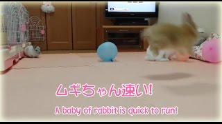 ムギちゃん速い A baby of rabbit is quick to run! thumbnail