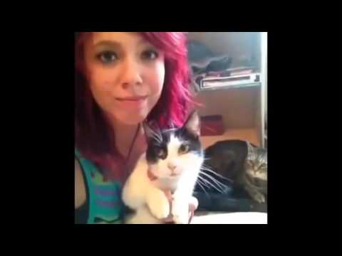 Funny cats with words II funny cats and kittens meowing compilation 2016