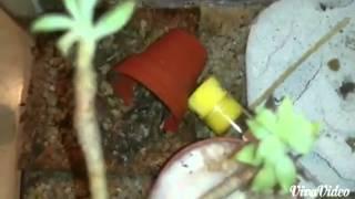 Trasloco Camponotus micans