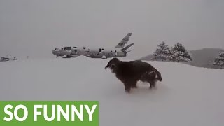 Dog completely loses his mind for epic snowfall