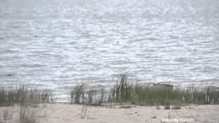 Кенозерье(Кенозерский национальный парк - отдых выходного дня., 2012-07-23T12:20:03.000Z)