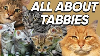 Fun Facts About Tabby Cats We Bet You Didn't Know