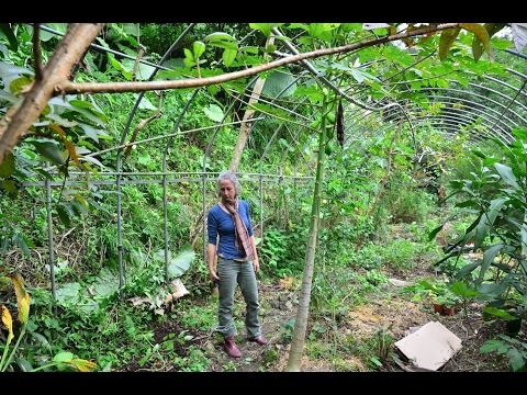 """""""Permaculture in Taiwan"""" a lesson from the edge by Tammy Turner"""