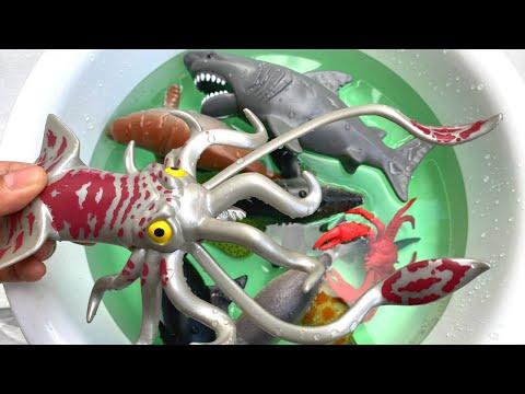 Learn Ocean Animals Wild Zoo Animals Sea Animals English Korean 해양 동물 알아보기 야생 동물 동물원 해양 동물 영어 한국어