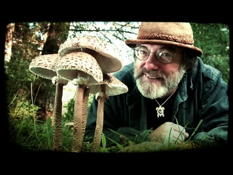 Mycology of Psilocybin Mushrooms - Paul Stamets