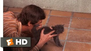 Day for Night (1973) - A Cat That Can't Act Scene (4/10) | Movieclips