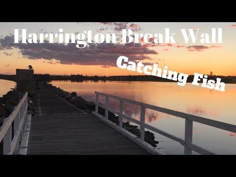 Harrington Breakwall Catching Fish - MId North Coast NSW