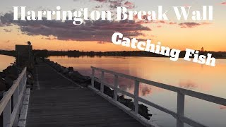 Harrington Breakwall Catching Fish - MId North Coast NSW