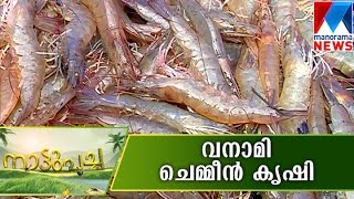 Vanami prawn farming | Manorama News
