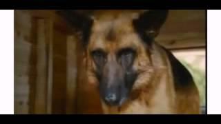 Советы по фильмом: Коты против собак ♥