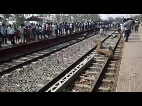 Bihar sharif students andolan