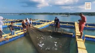 Aquatec, Sarana Kelautan Perikanan buatan Indonesia