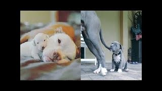 ♥Cute Cats and Dogs Doing Funny Things 2018♥ # 2 - Funny Dog and Cat Videos
