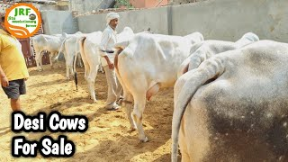 👍For Sale: Best #Desi #Cows available for Buyers.👍( Golu 9812158812) Village Kharkara, Rohtak.👍