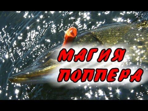 Рыбалка  Ловля щуки на поппер