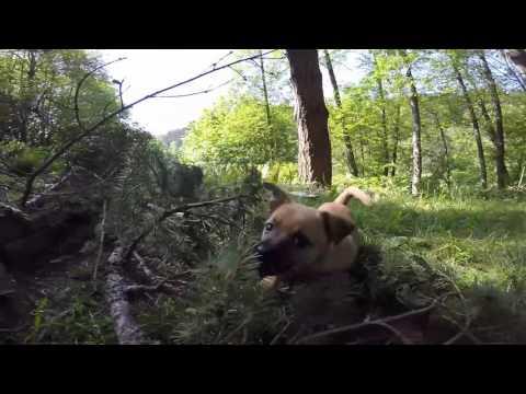 Mac The Mining dog