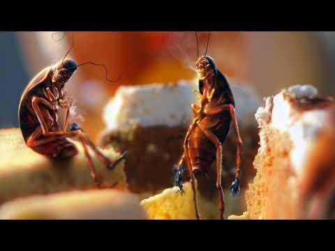 Почему появляются тараканы?