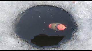 Рыбалка Плотва и другая рыба Ладога Река Волхов Палатка