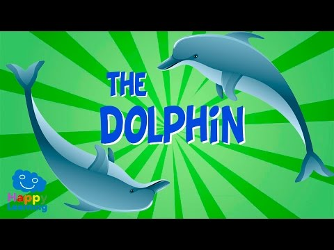 The Dolphin   Educational Video for Kids.