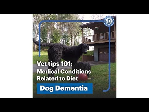 Medical Conditions tied to Diet - Dog Dementia