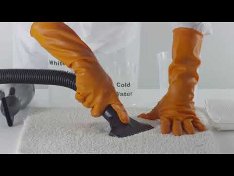 Carpet Cleaning Problems:  How To Remove Cat Urine Smell
