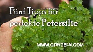 Fünf Tipps für perfekte Petersilie - Petersilie pflanzen