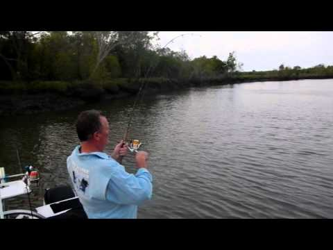 Fishing Threadfin Salmon Townsville2011 Fishing Charters Townsville.com.au