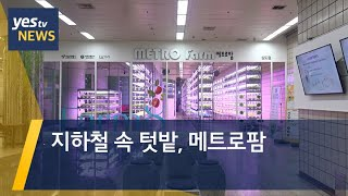 [yestv뉴스] 지하철 속 텃밭, 메트로팜