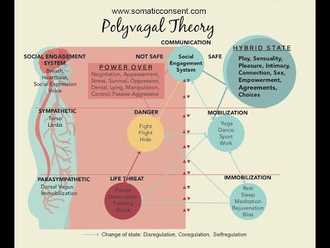 Polyvagal Theory Dr Stephen Porges