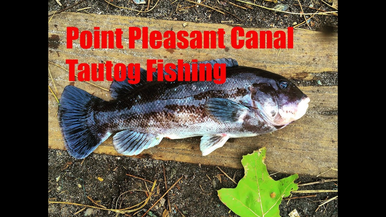 Point pleasant canal tautog fishing youtube for Point pleasant fishing report