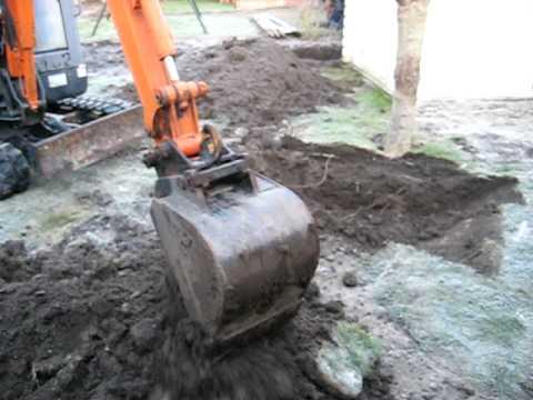 Catalpa uitgraven